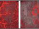 Tomografía de Coherencia Óptica. Uso en Dermatología - Optical Coherence Tomography. Use in Dermatology